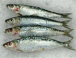 Sardine Festival in Portugal