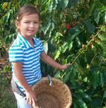 Kona Coffee Cultural Festival