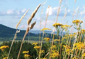 Agritourism in the Czech Republic