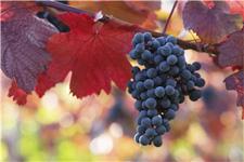 Grand Rapids International Wine & Food Festival