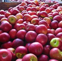 Apple Festivals Mean Autumn