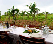 A Farm Dinner in Jamaica?