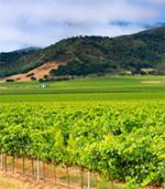 Sacramento Wine