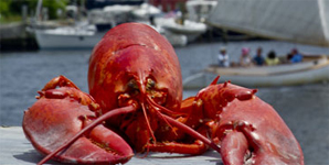 Lobster Days in Mystic