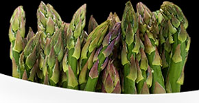 Asparagus Festival