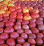 Hollywood's Tomato Fest