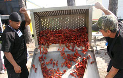 Lake Charles Crawfish Festival