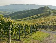 Giro d'Italia Wine Festival