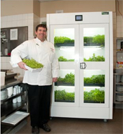 An Urban Cultivator in Phoenix