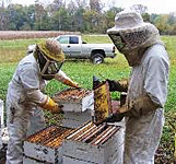 Hunters Honey Farm