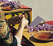 Saffron Rose Festival in Spain