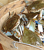 Crab Feast in Annapolis, Maryland