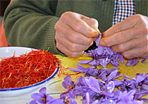 Spain's Saffron Rose Fiesta