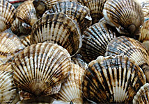 It's Scalloping Season on Florida's Crystal River