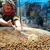 A Gastronomic Fiesta of Snails in Spain