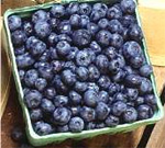 National Blueberry Festival