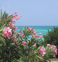 """Rendezvous Bay <em>(Photo by Susan McKee)</em>"""" title=""""oleander"""" width=""""200″ height=""""216″ class=""""size-full wp-image-1053″ /><p class="""