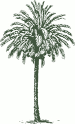datepalm