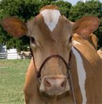 Lavon Farms, Plano, Texas