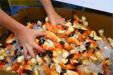 florida_marathon_seafoodfest