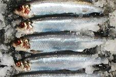 england_hastings_herring