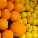 grapefruit lemons blood-oranges
