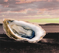 massachusetts_wellfleet_oysterfest