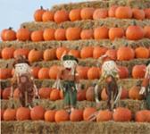 michigan_south-lyon_pumpkin