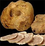 truffle-white