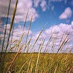 minnesota_wild-rice