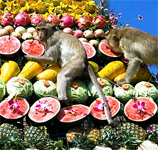 thailand_macaque