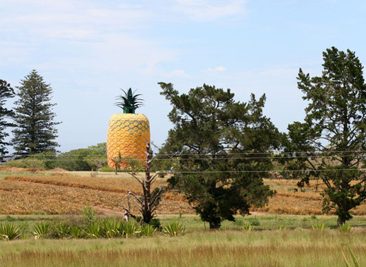 Big Pineapple, Eastern Cape, South Africa