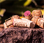 """Corks & Cactus"" at the Desert Botanical Garden"