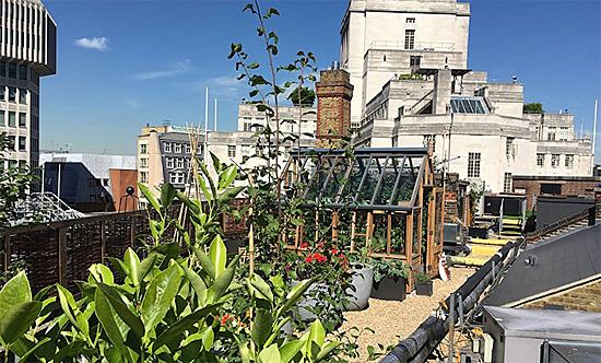 Roof Garden, St. Ermin's Hotel, London, England