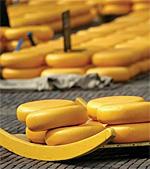 Alkmaar's Cheese Market