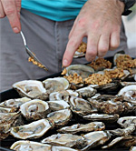 Hangout Oyster CookOff, Gulf Shores, Alabama
