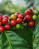 Coffee and Conservation in Central Indiana