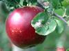 Historic Orchard at Altapass