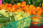 Gourmet Chili Pepper and Salsa Festival