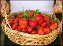 It's Almost Strawberry Season!