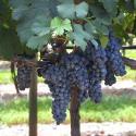 Wine Highway Weekend