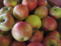 Apple Fair in Kelowna