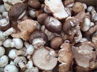 Texas Mushroom Festival