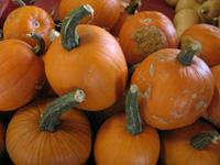 London Autumn Harvest Show