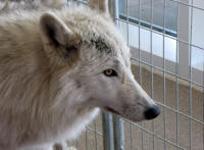 Cape Fear Wildlife Expo