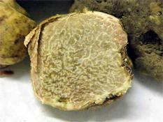 White Truffles in Italy