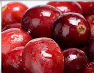 Cranberry Harvest in Wisconsin