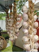 Perth Garlic Festival