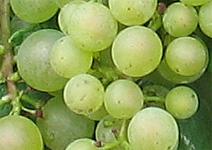 WeinForum Mosel