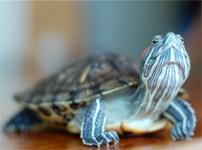 Turtles On Parade
